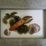 Photo of a crayfish framed