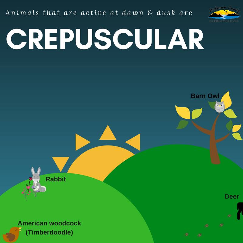 Graphic about crepuscular animals