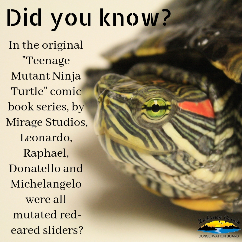 Graphic about ninja turtles